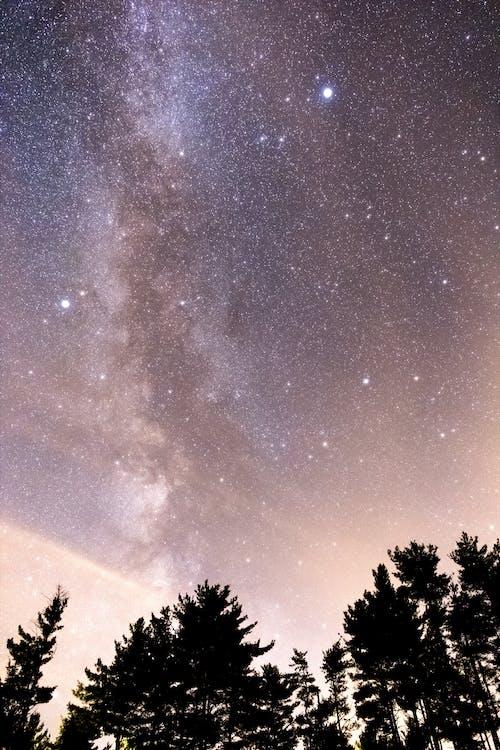 Foto d'estoc gratuïta de arbres, astrologia, astronomia, cel estrellat