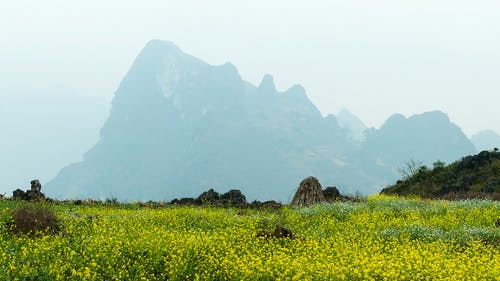 Free stock photo of hagiang