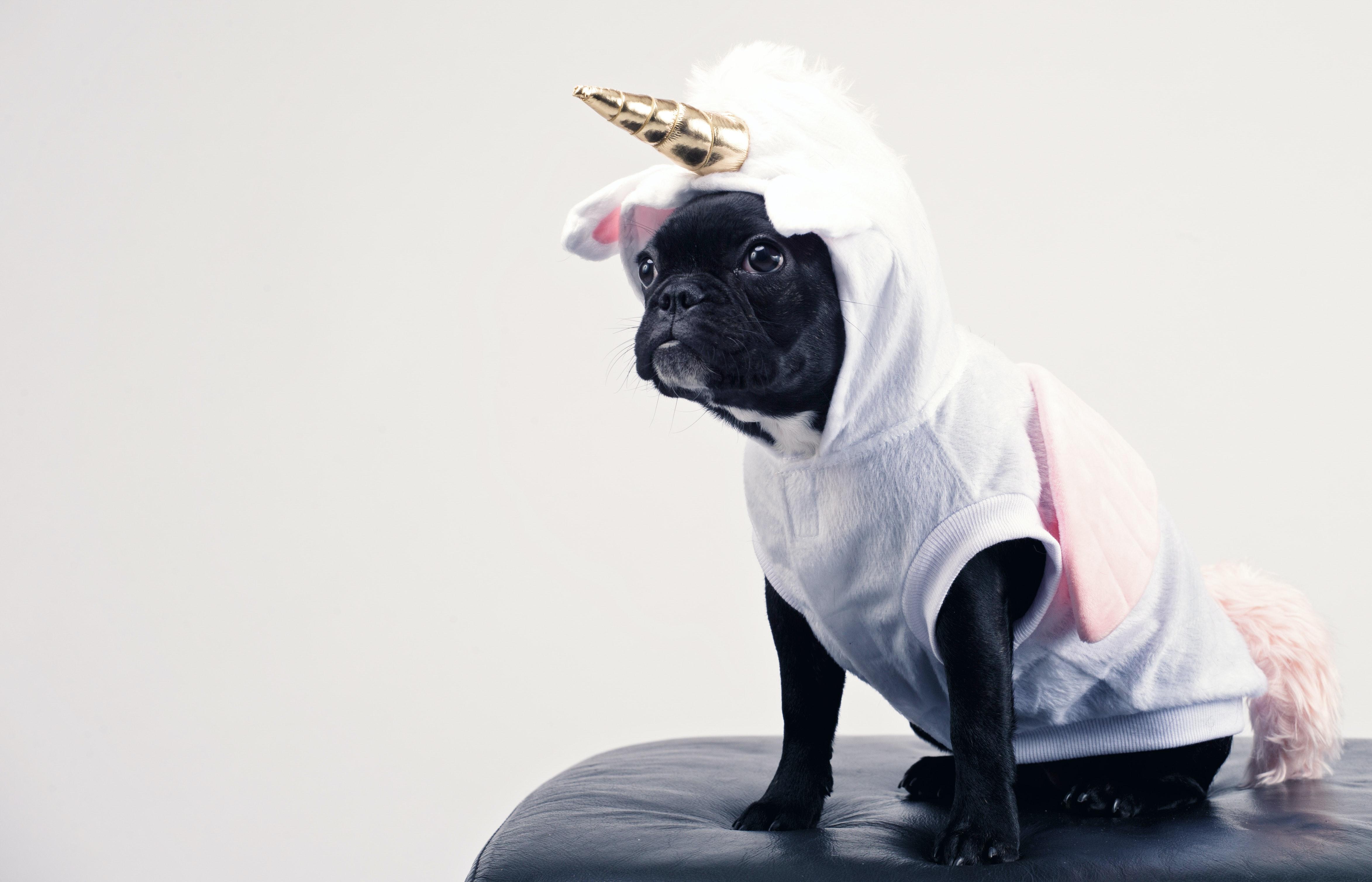 114634b9e3b Boston Terrier Wearing Unicorn Pet Costume · Free Stock Photo