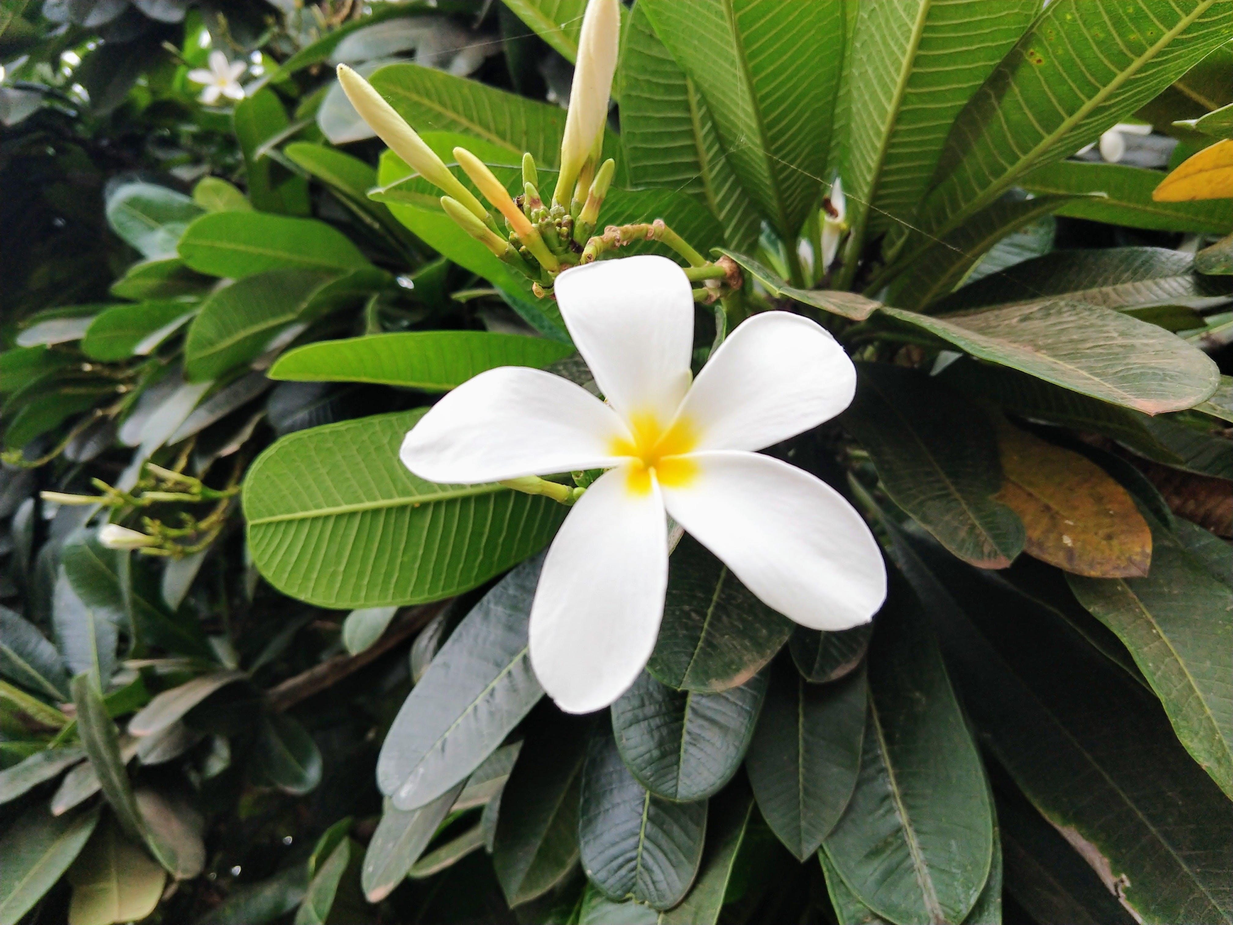 Free stock photo of white flower...
