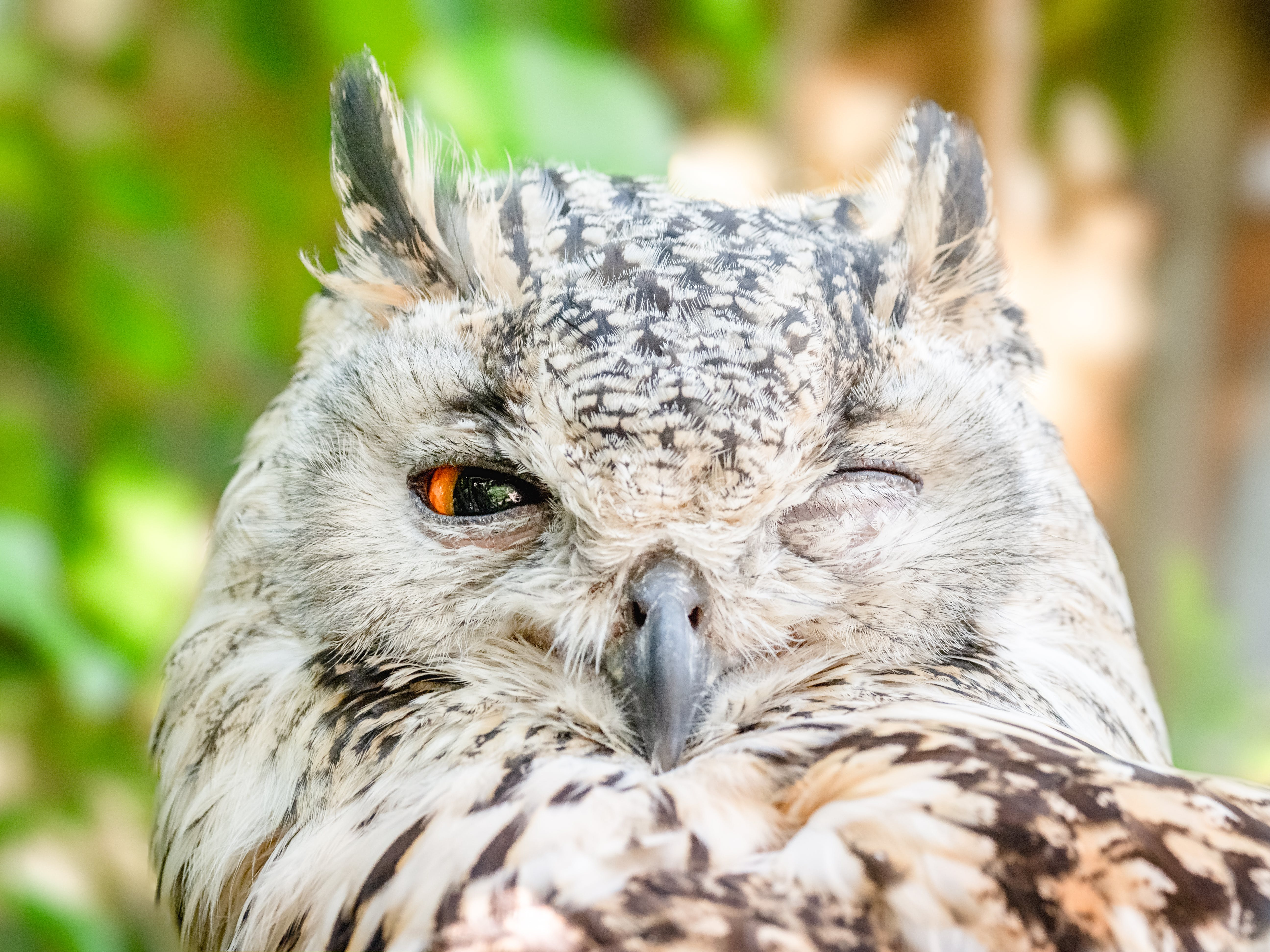 Close-up Photo of Owl with One Eye Open