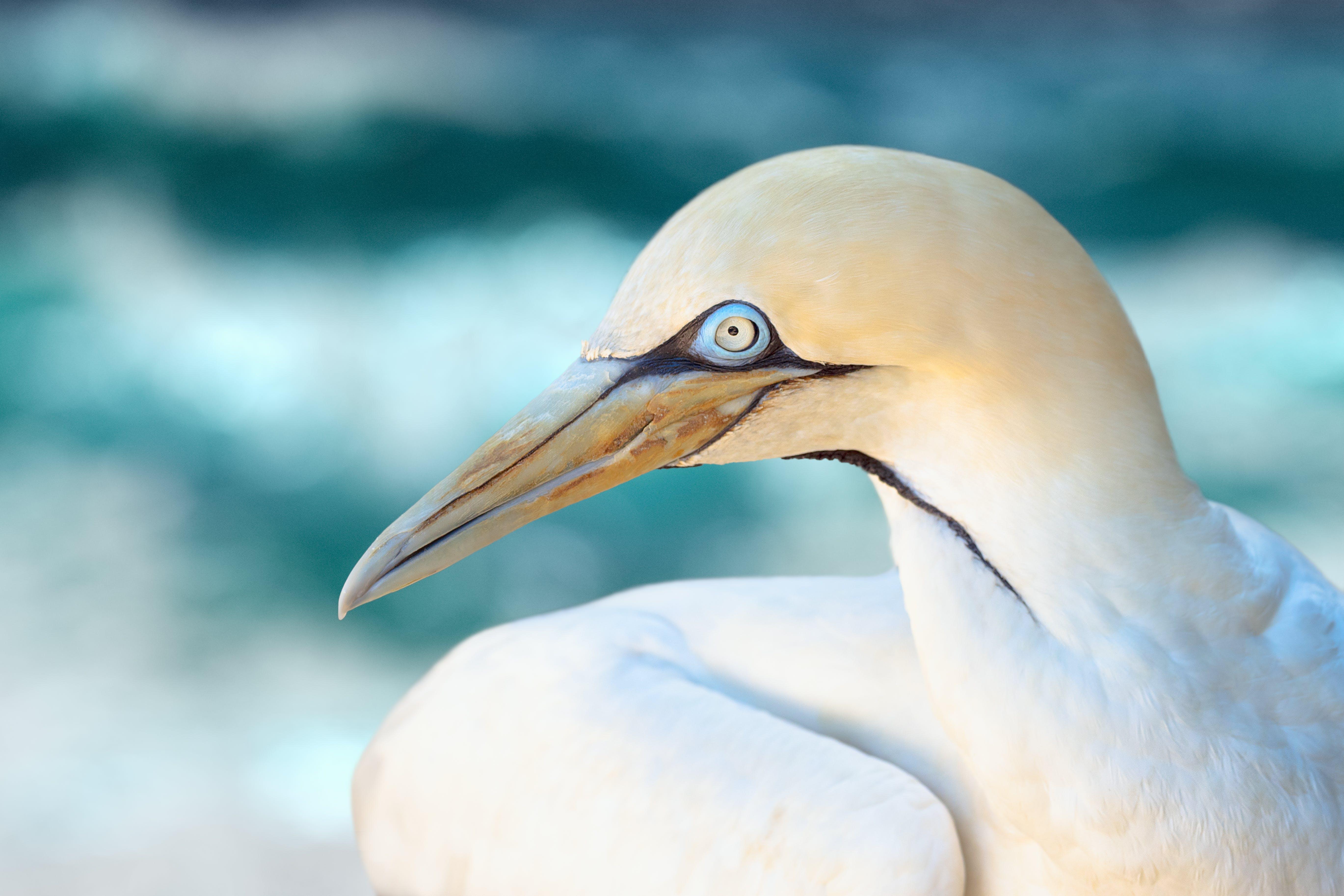 Close-Up Photo of White Bird