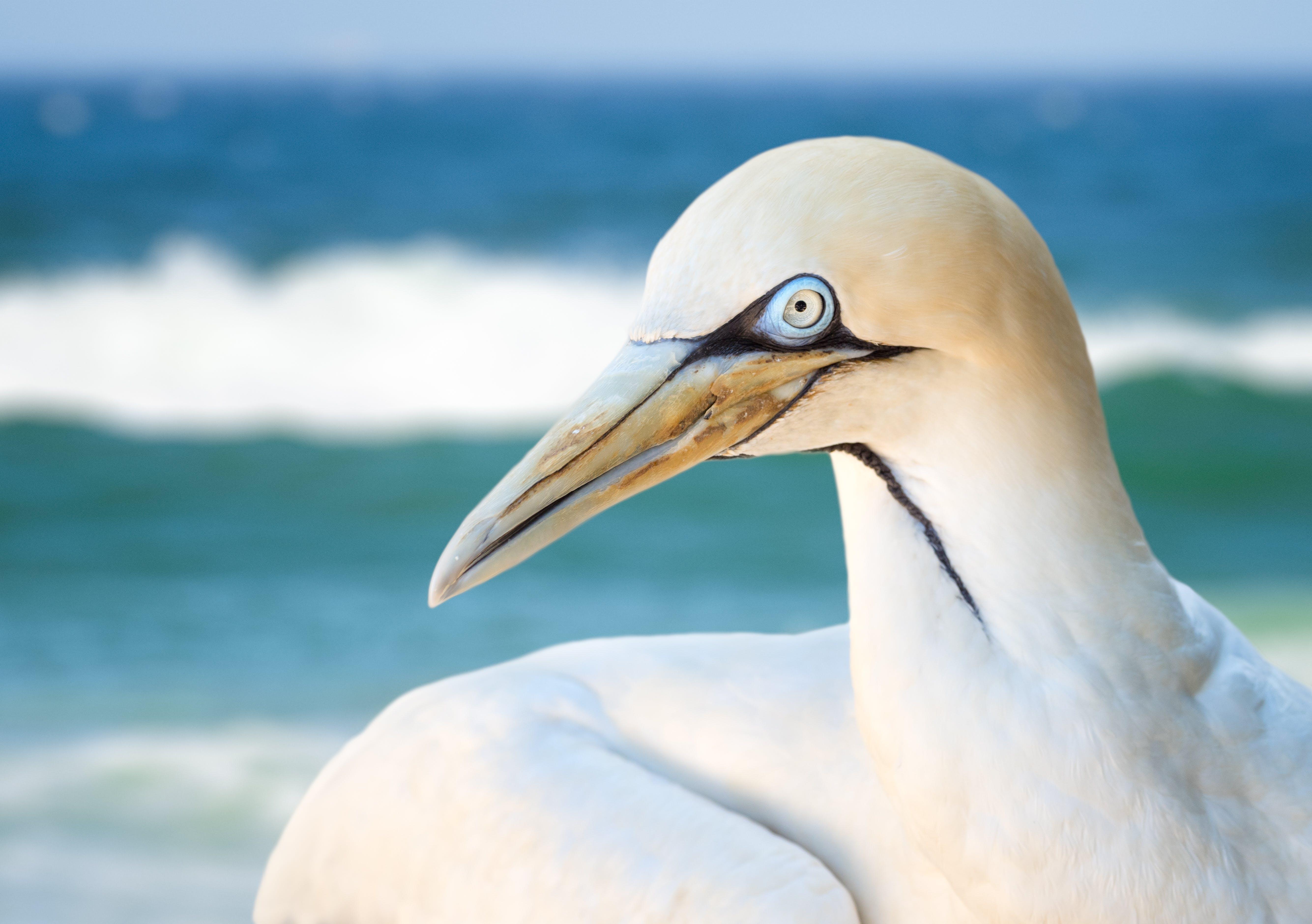 Close-up Photo of Albatross Bird