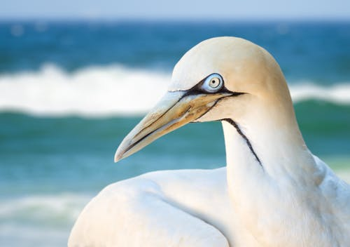 Close-up Photo of Albatross Bird