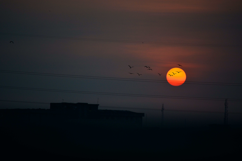 Free stock photo of electric lines, evening sky, evening sun, flock of birds