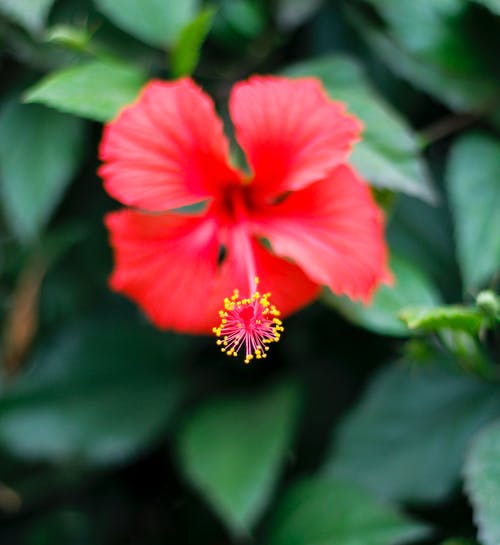 Gratis arkivbilde med rød blomst, vakre blomster