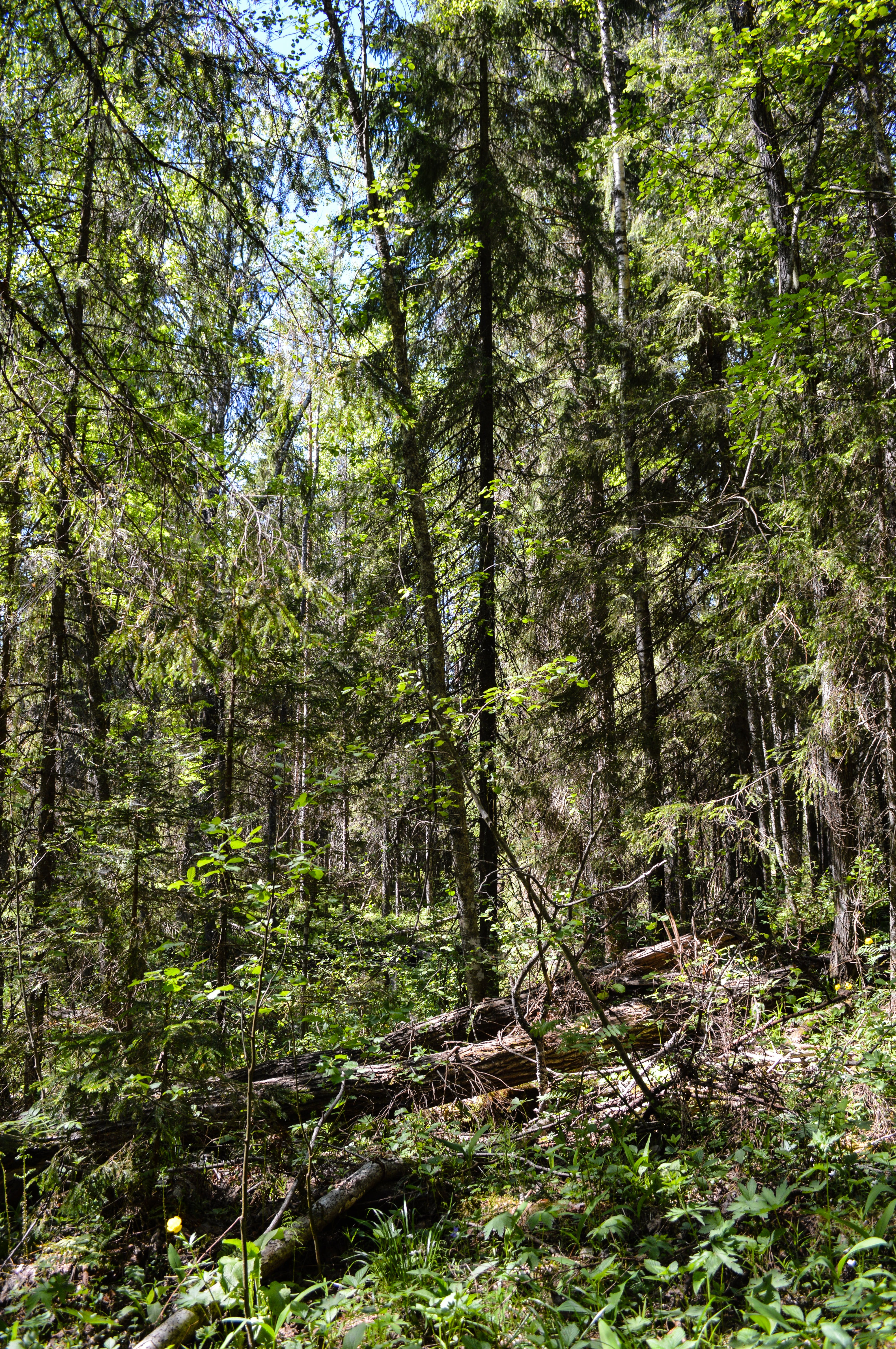 alaska, camping, impenetrable forests