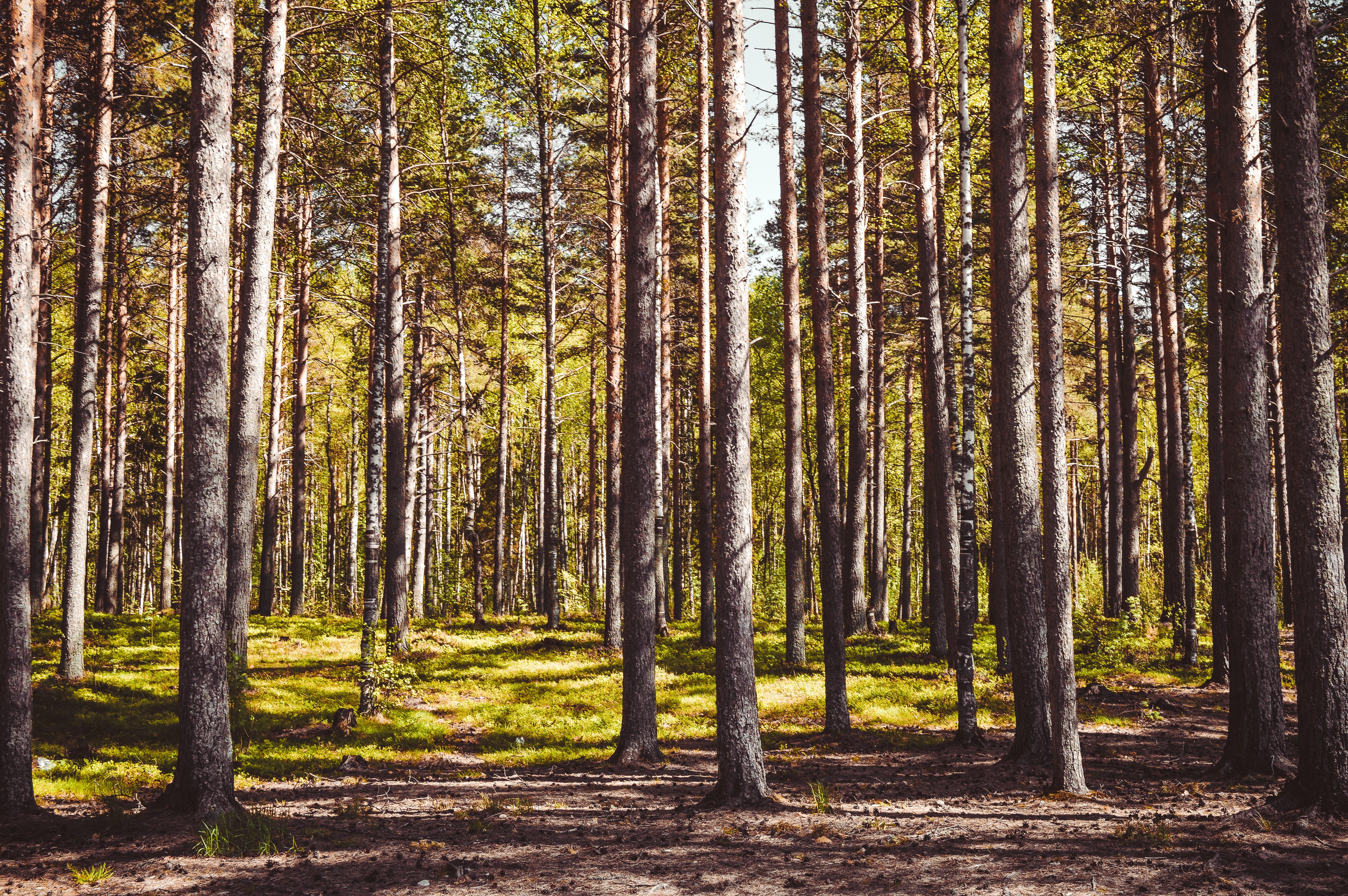 Kostenloses Stock Foto zu 4k wallpaper, badehose, bäume, baumstämme