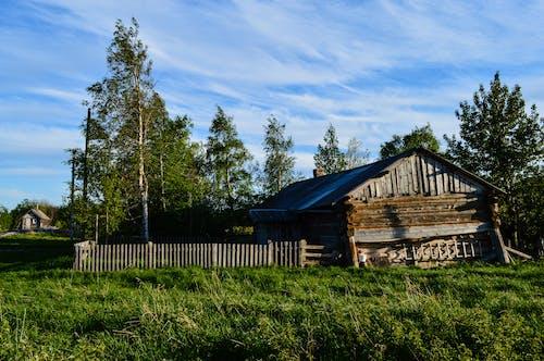 Photos gratuites de arbres, bâtiment, cabine, grange