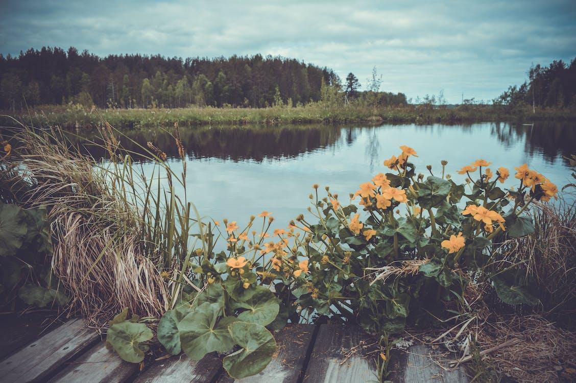 Yellow Flowers Near Body Of Water