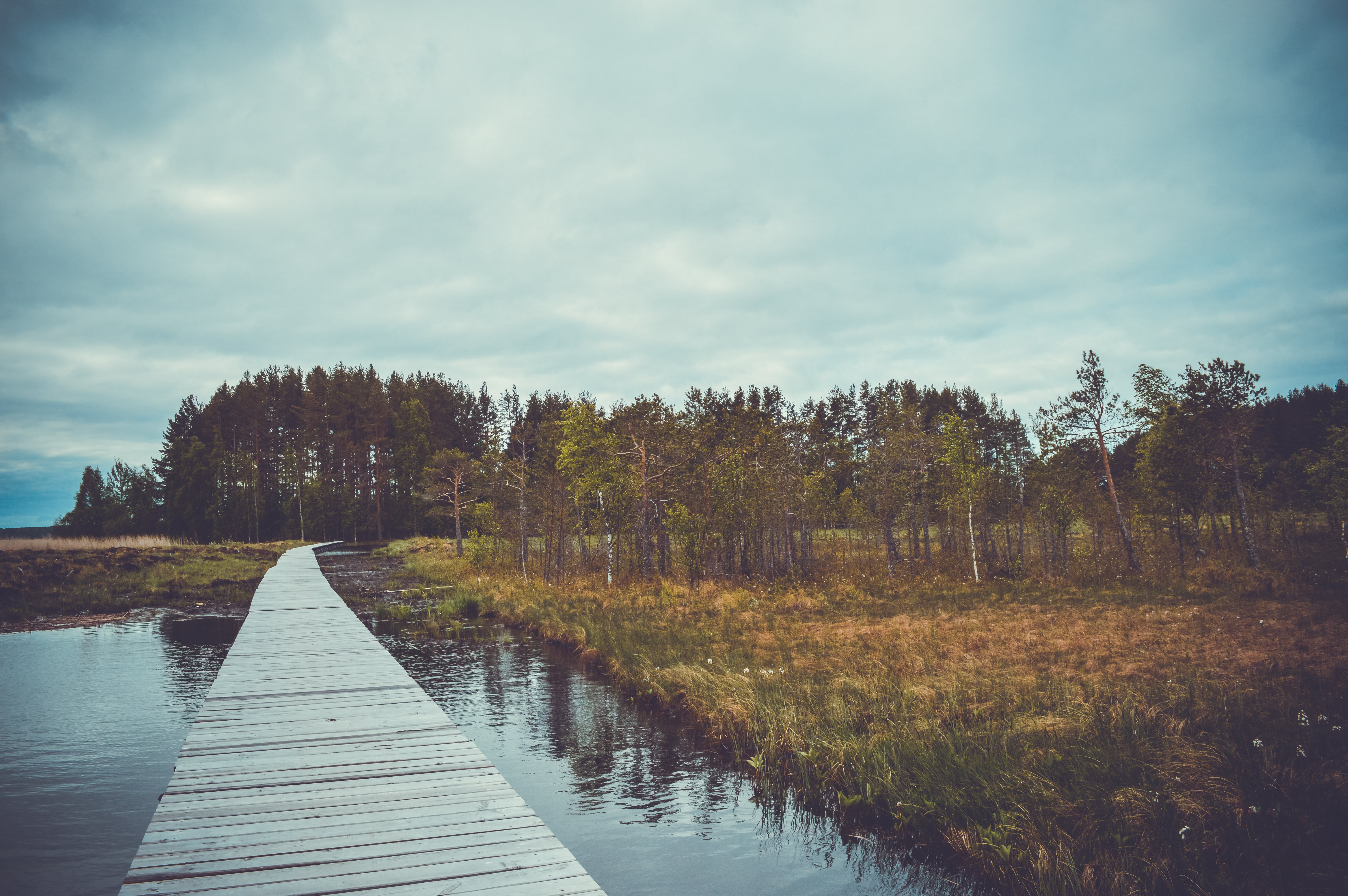 Free stock photo of alaska, camping, impenetrable forests, lakes