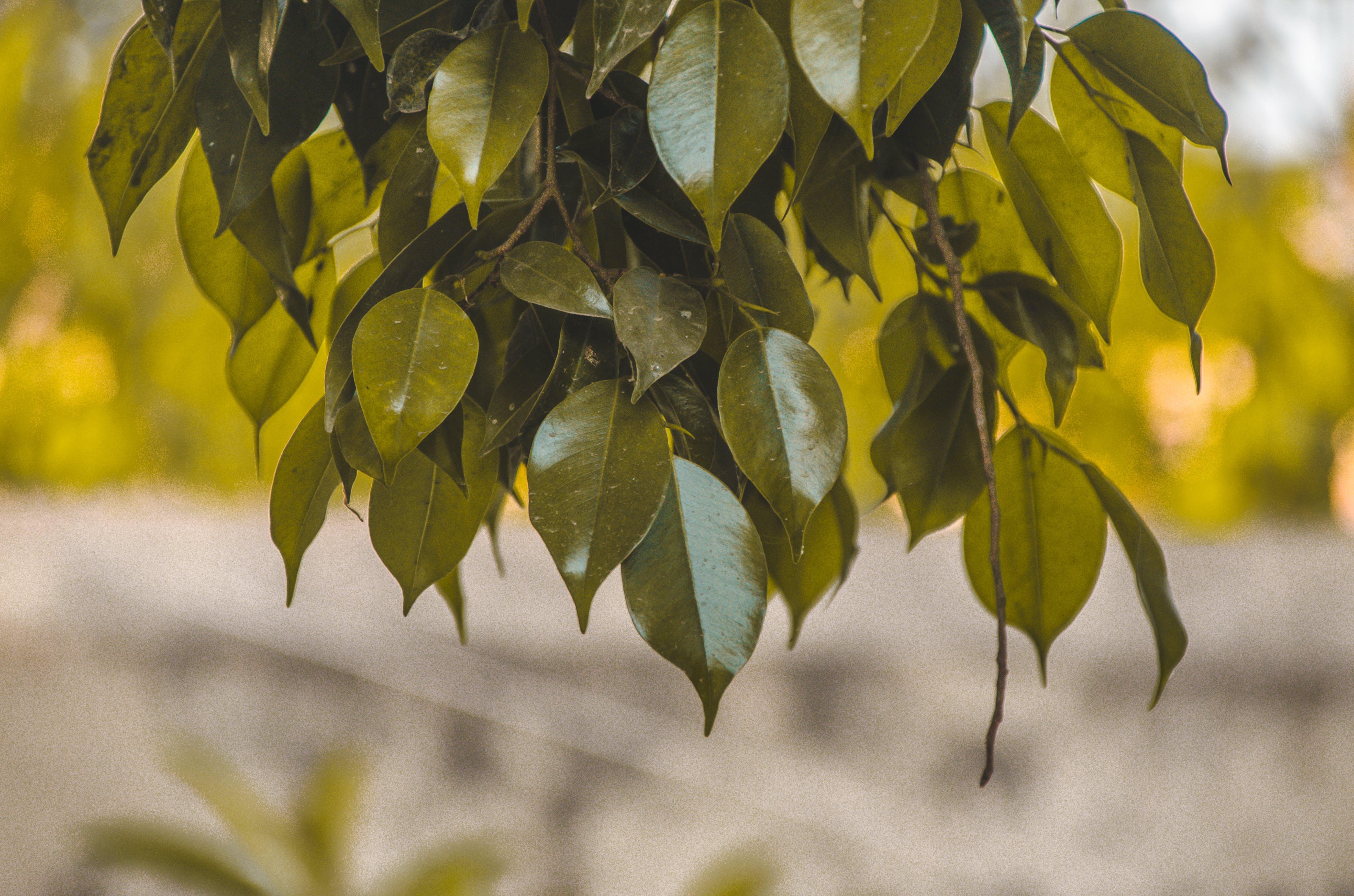 Kostenloses Stock Foto zu draussen, dunkelgrün, dunkelgrüne pflanzen, fotografie