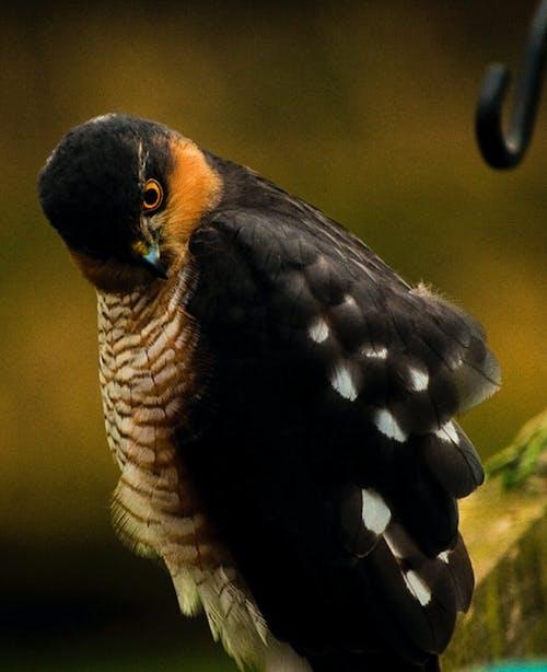 Free stock photo of birds of prey