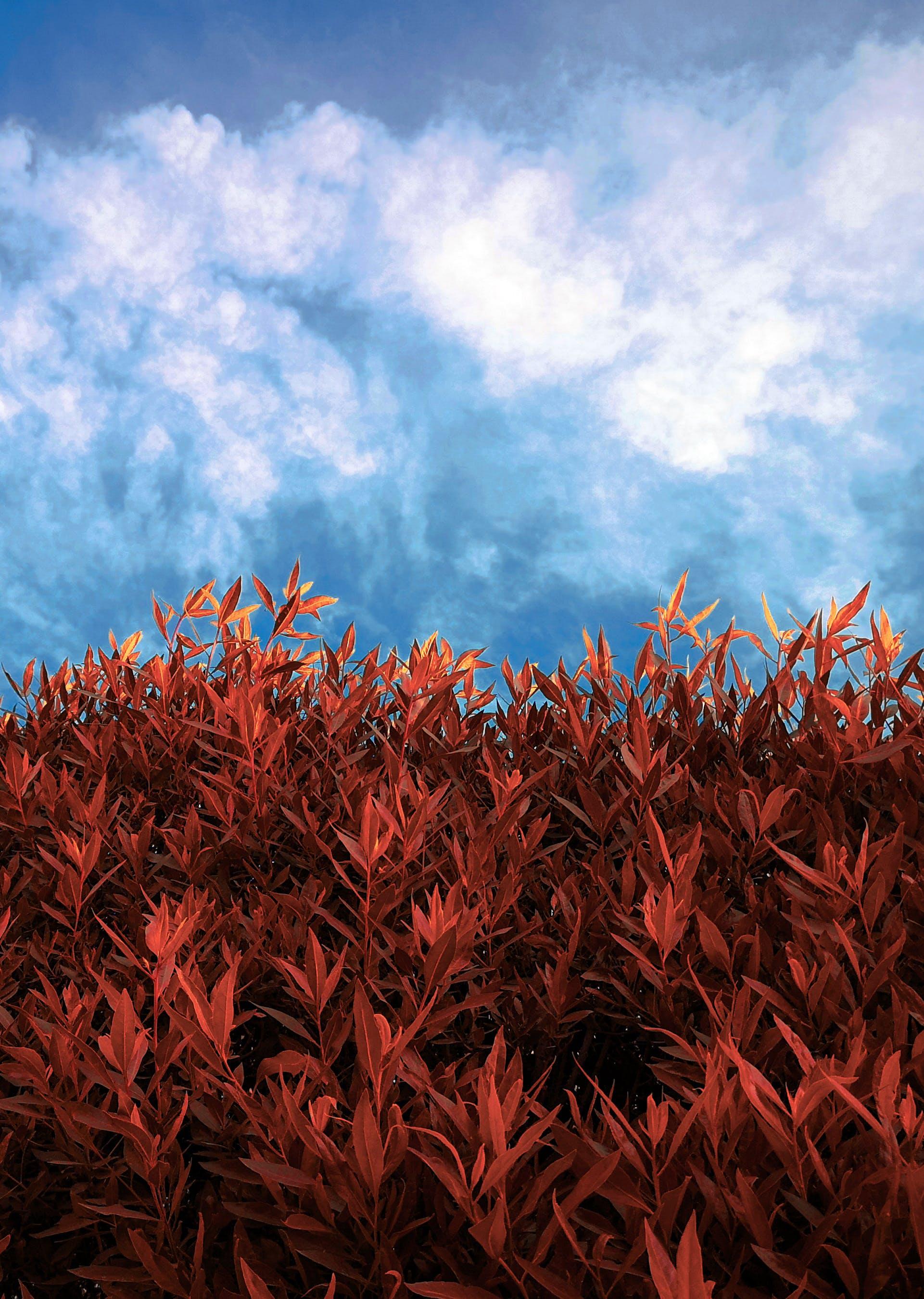 Free stock photo of blue sky, flower, red flower, tree