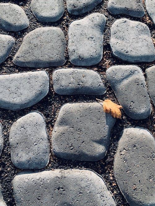 Foto d'estoc gratuïta de fulles, pedres