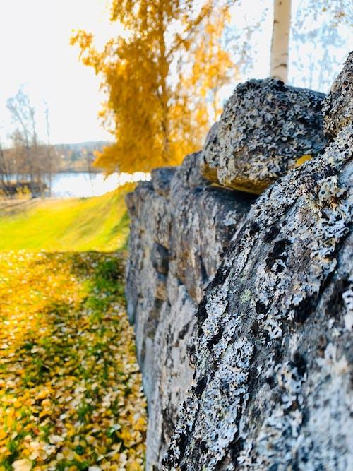 Foto d'estoc gratuïta de mur, pedra