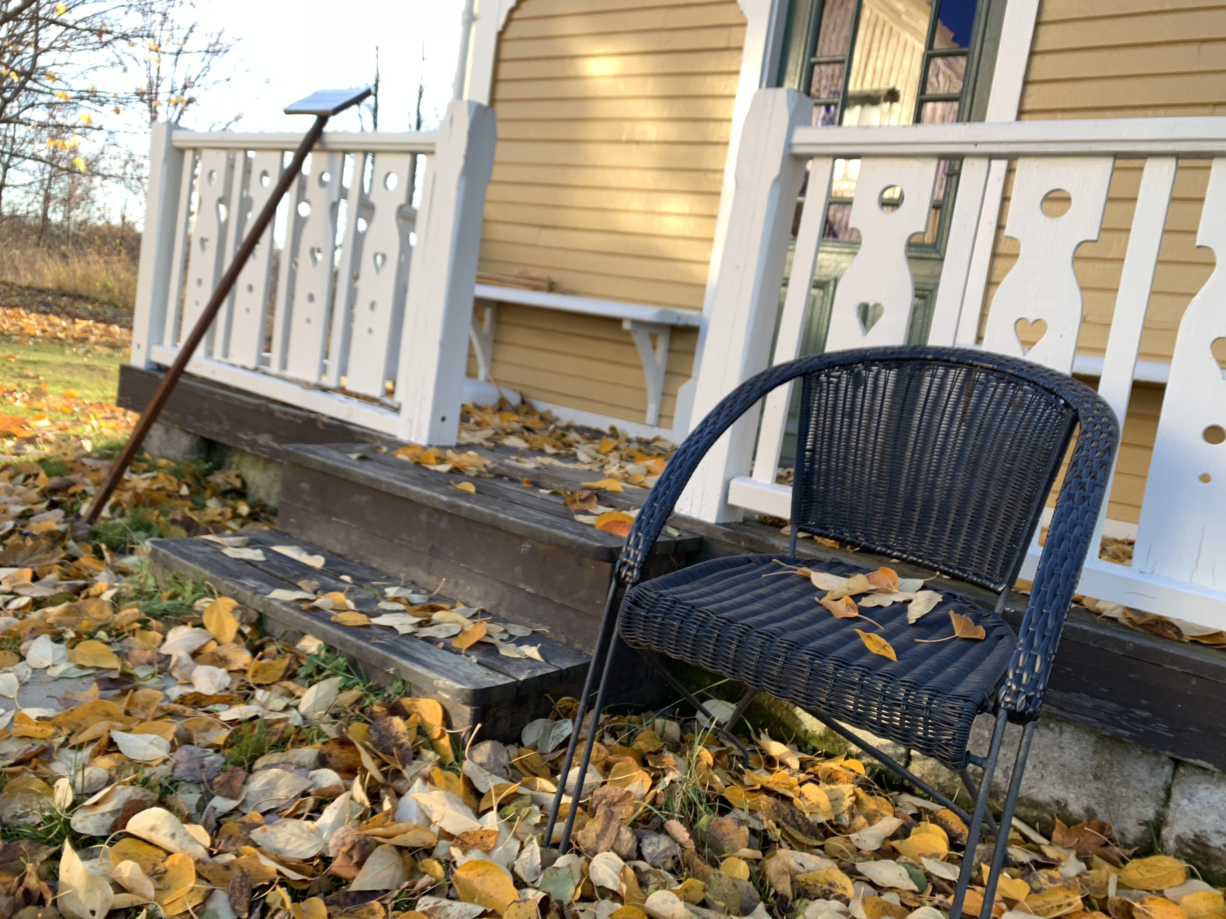 Free stock photo of autumn, leafs
