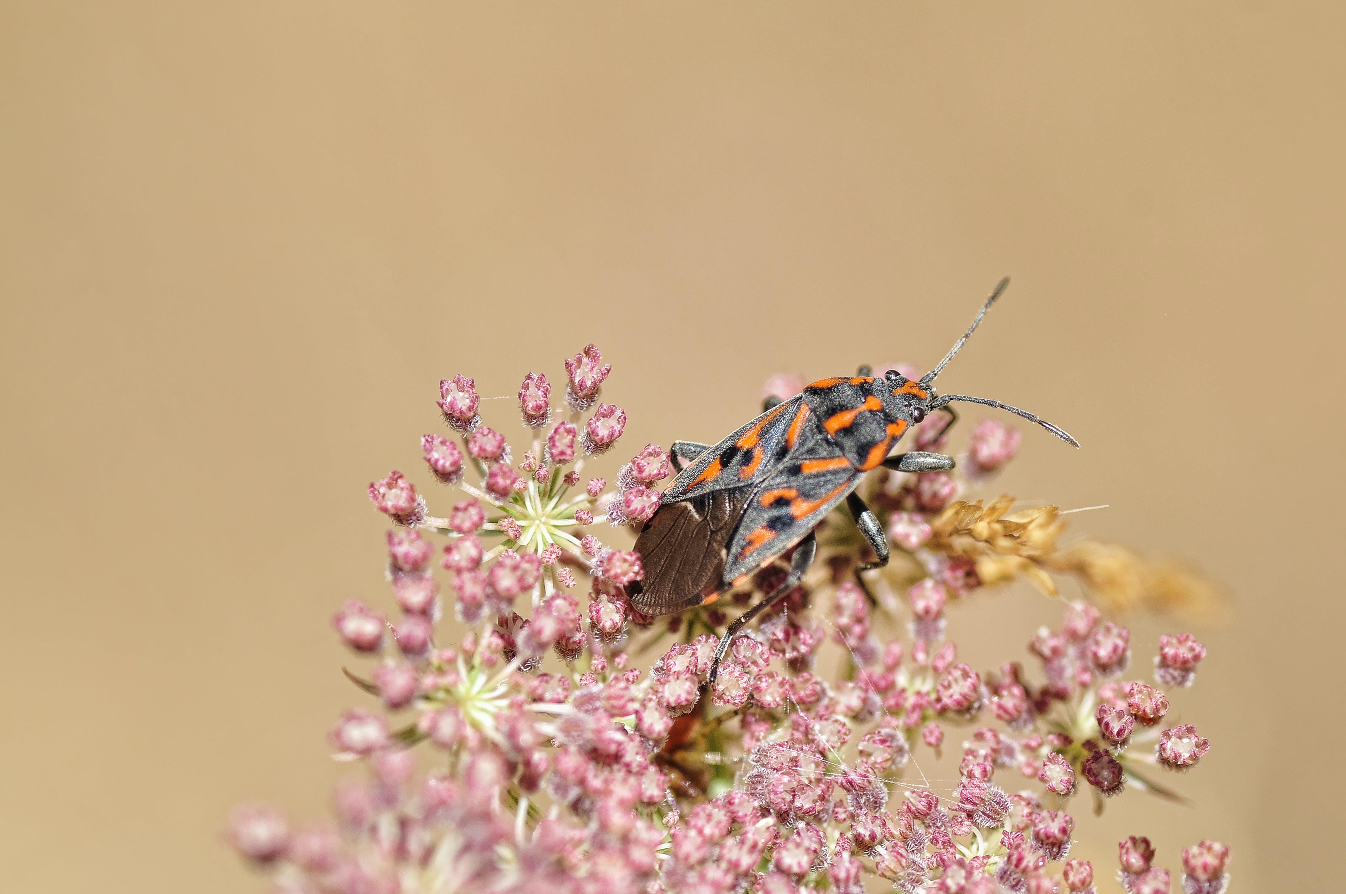 小蟲, 昆蟲, 植物群, 甲壳虫 的 免费素材照片