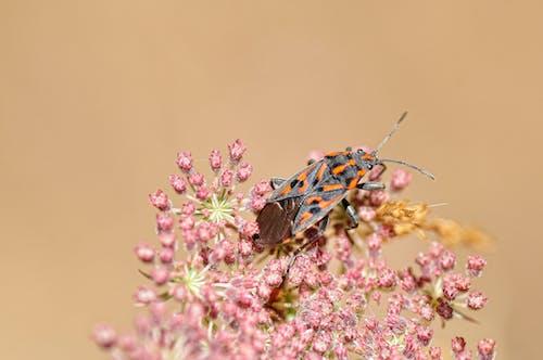 小蟲, 昆蟲, 植物群, 甲蟲 的 免費圖庫相片