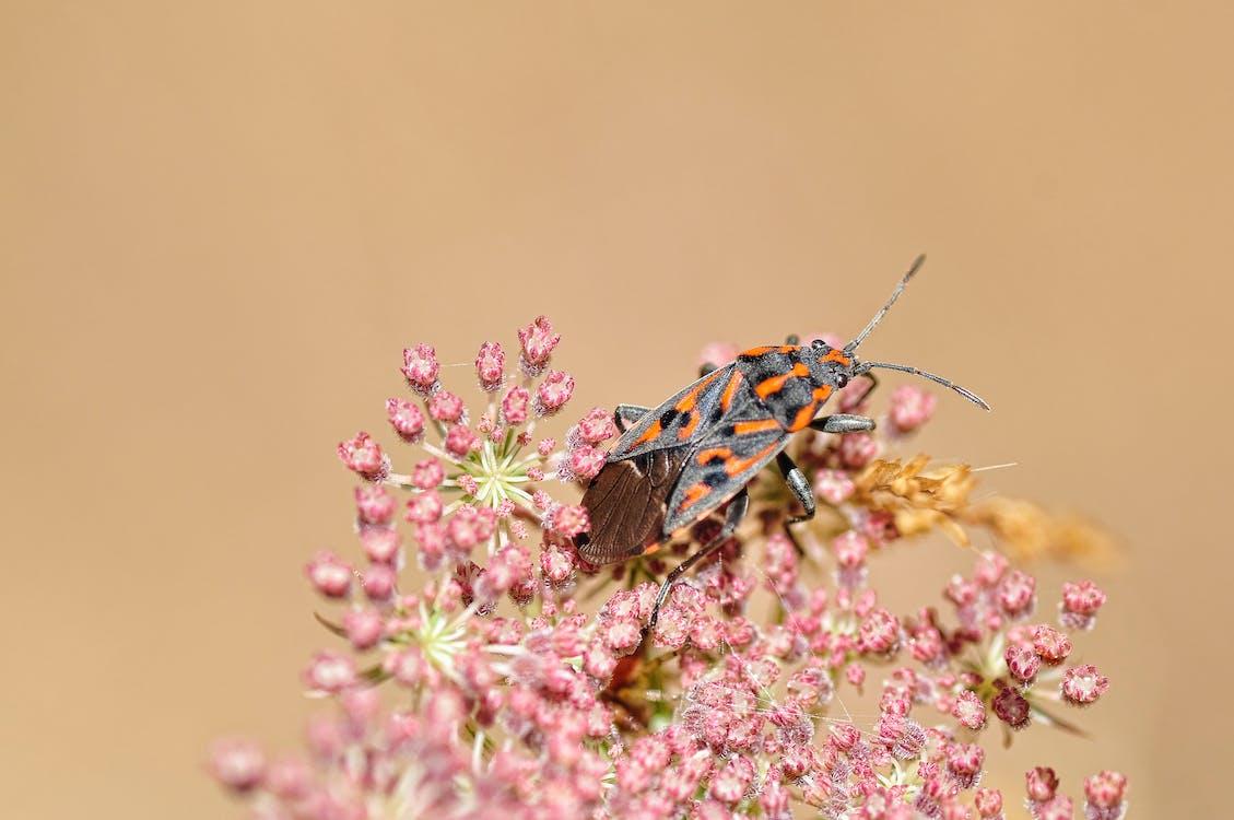 小蟲, 昆蟲, 植物群