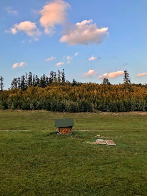 Foto profissional grátis de animal, árvores, crepúsculo, descanso