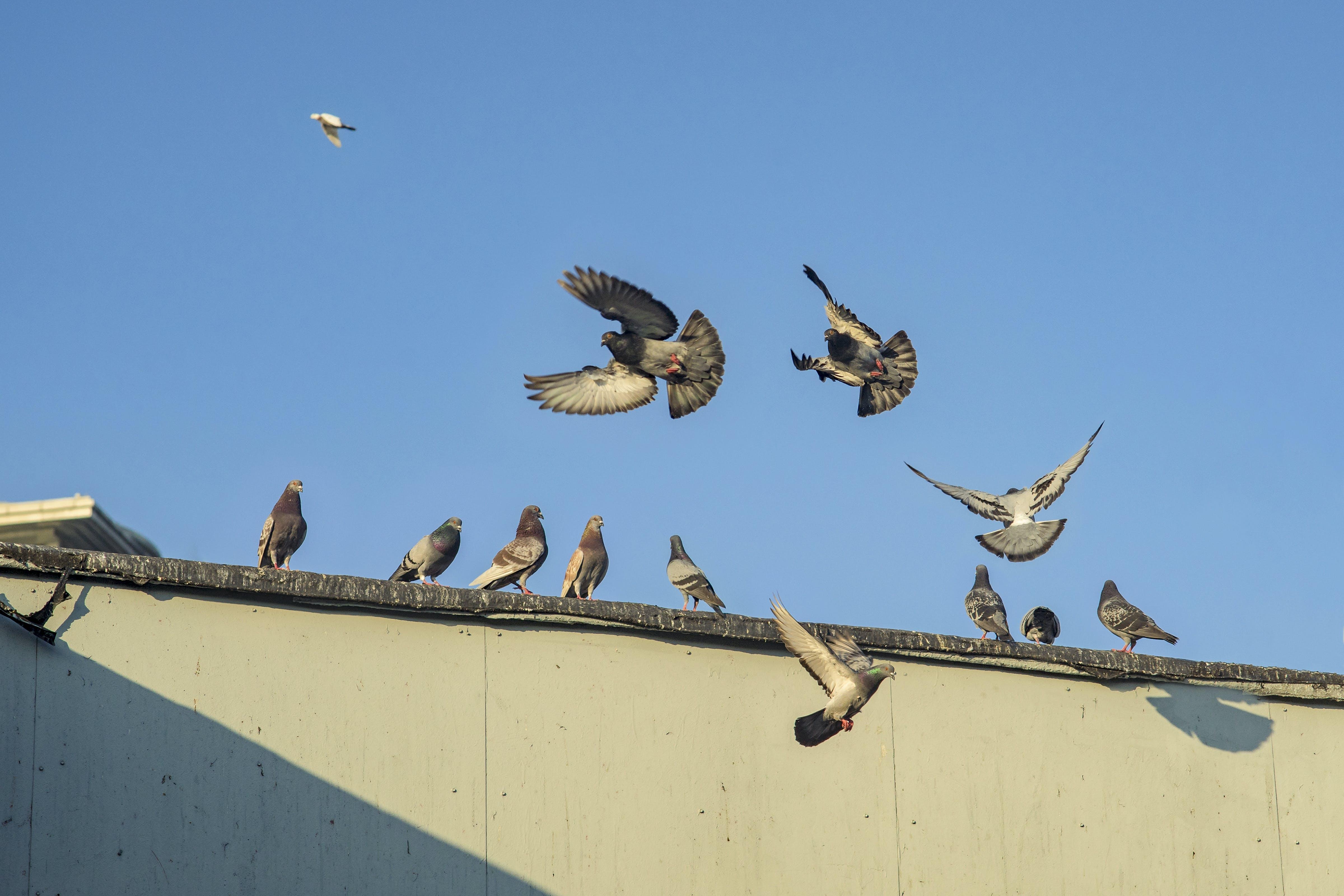 Free stock photo of animals, blue, city, flying