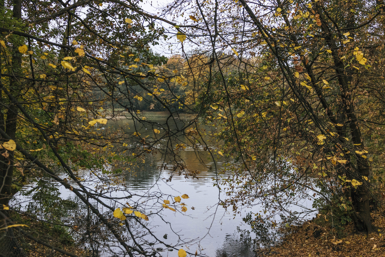 Kostenloses Stock Foto zu bäume, farben des herbstes, gelb, park