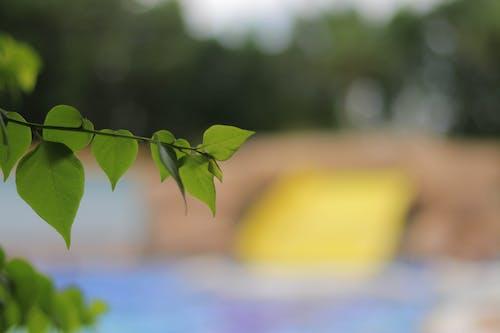 คลังภาพถ่ายฟรี ของ ชีวิตธรรมชาติ, ดอกไม้สวย, ต้นไม้, ธรรมชาติ