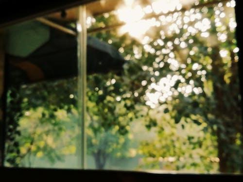 Δωρεάν στοκ φωτογραφιών με hdr, Ανατολή ηλίου, απογευματινός ήλιος, βοτανική