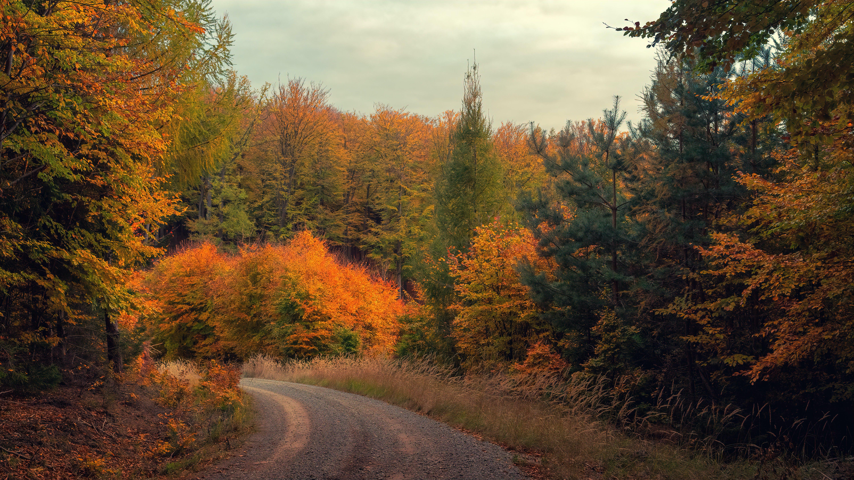 Kostenloses Stock Foto zu bäume, holz, pflanzen, straße