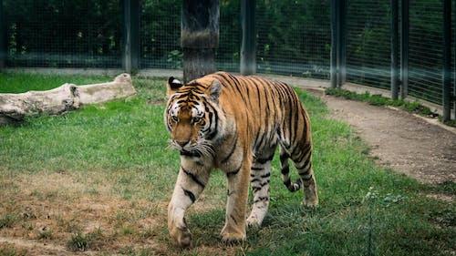 Gratis stockfoto met dierentuin