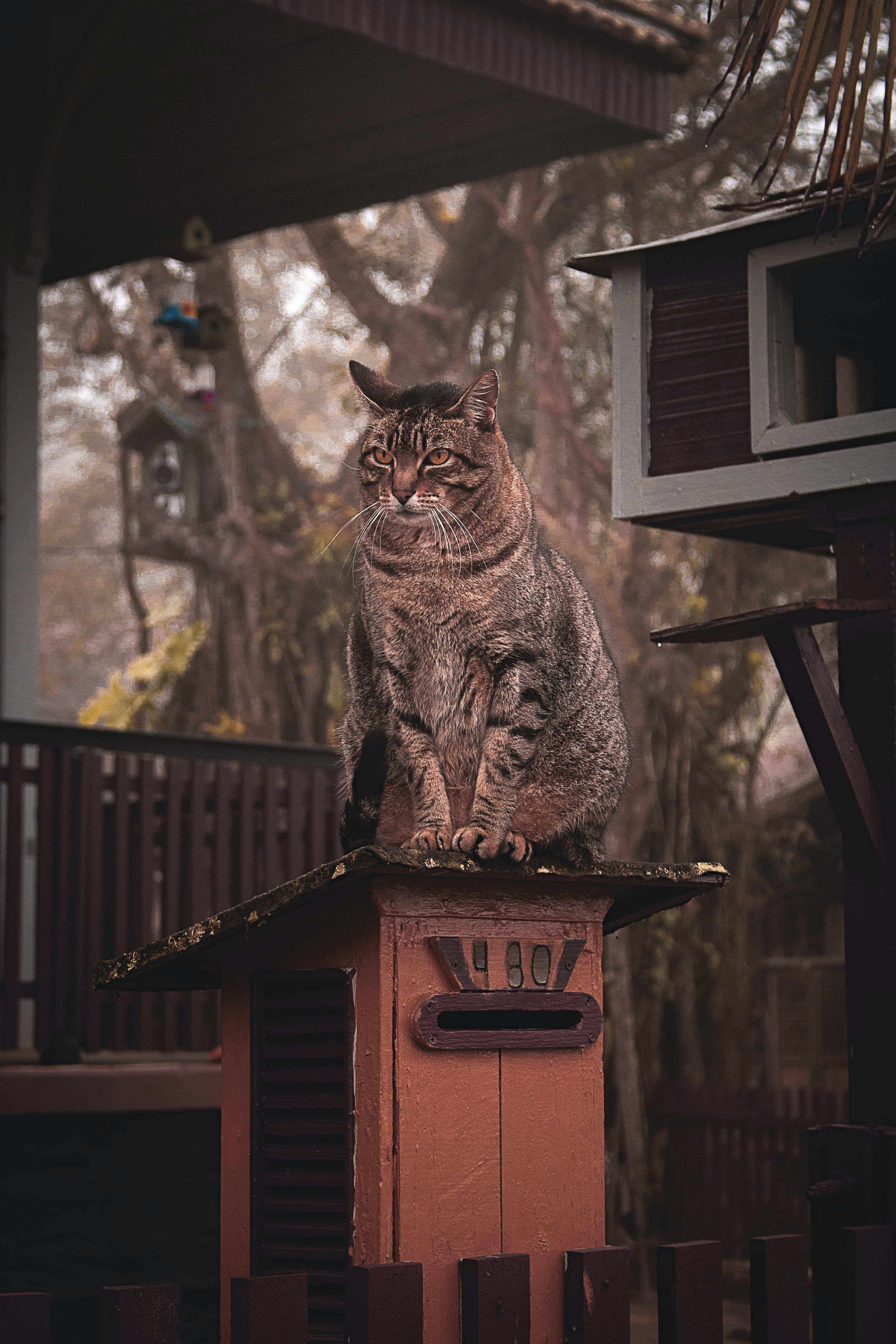 Brown Tabby Cat on Top of Wooden Beam