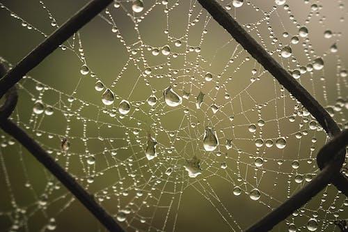 Free stock photo of fence, raindrops, spider, spiderweb