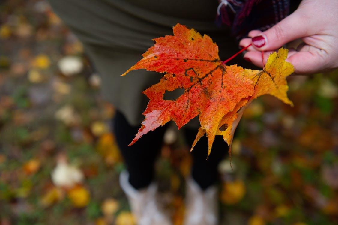 appelsin, efterårsblade, efterårsfarver