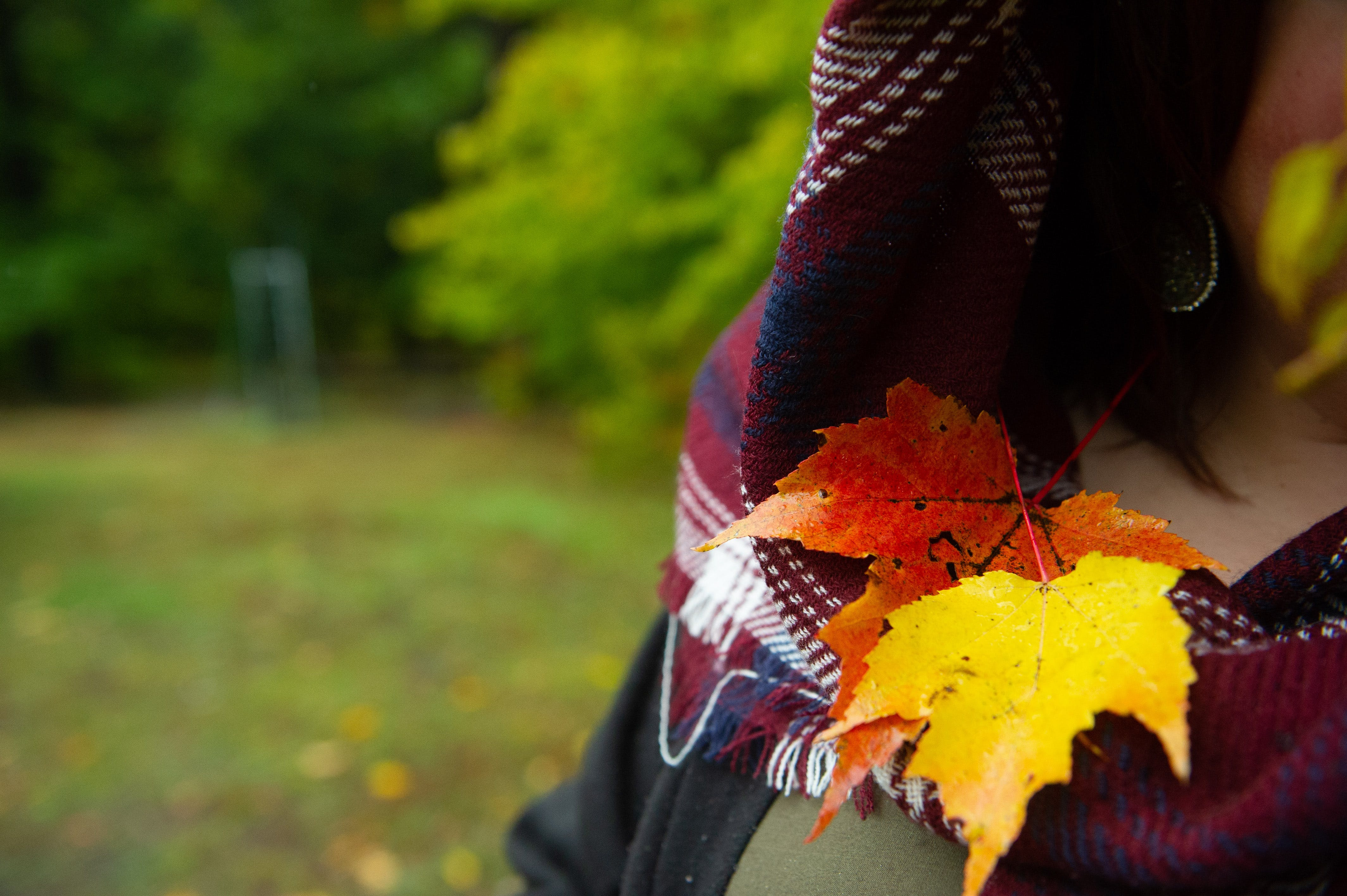 bosc, bufanda, colors de tardor
