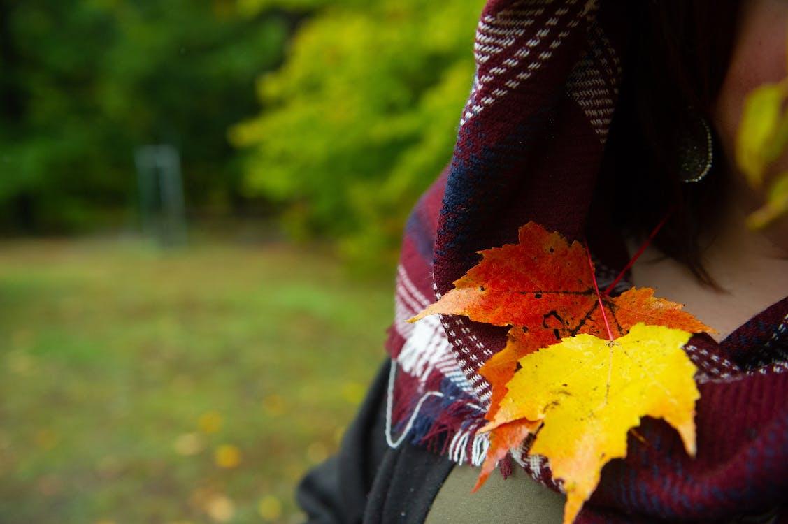 kẻ sọc, khăn quàng cổ, lá rơi