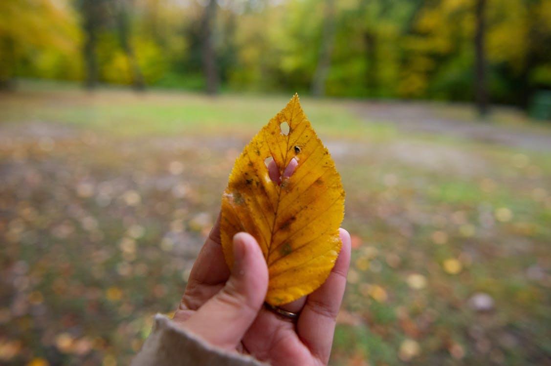colori autunnali, fogliame autunnale, foglie autunnali