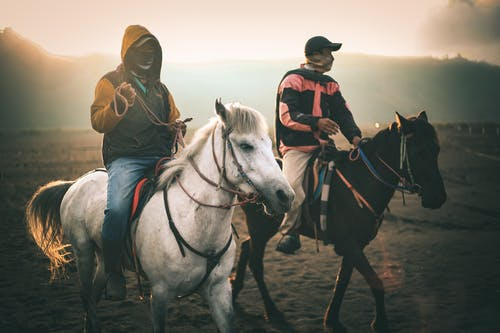 Free stock photo of adventure, black, horse, horse rider