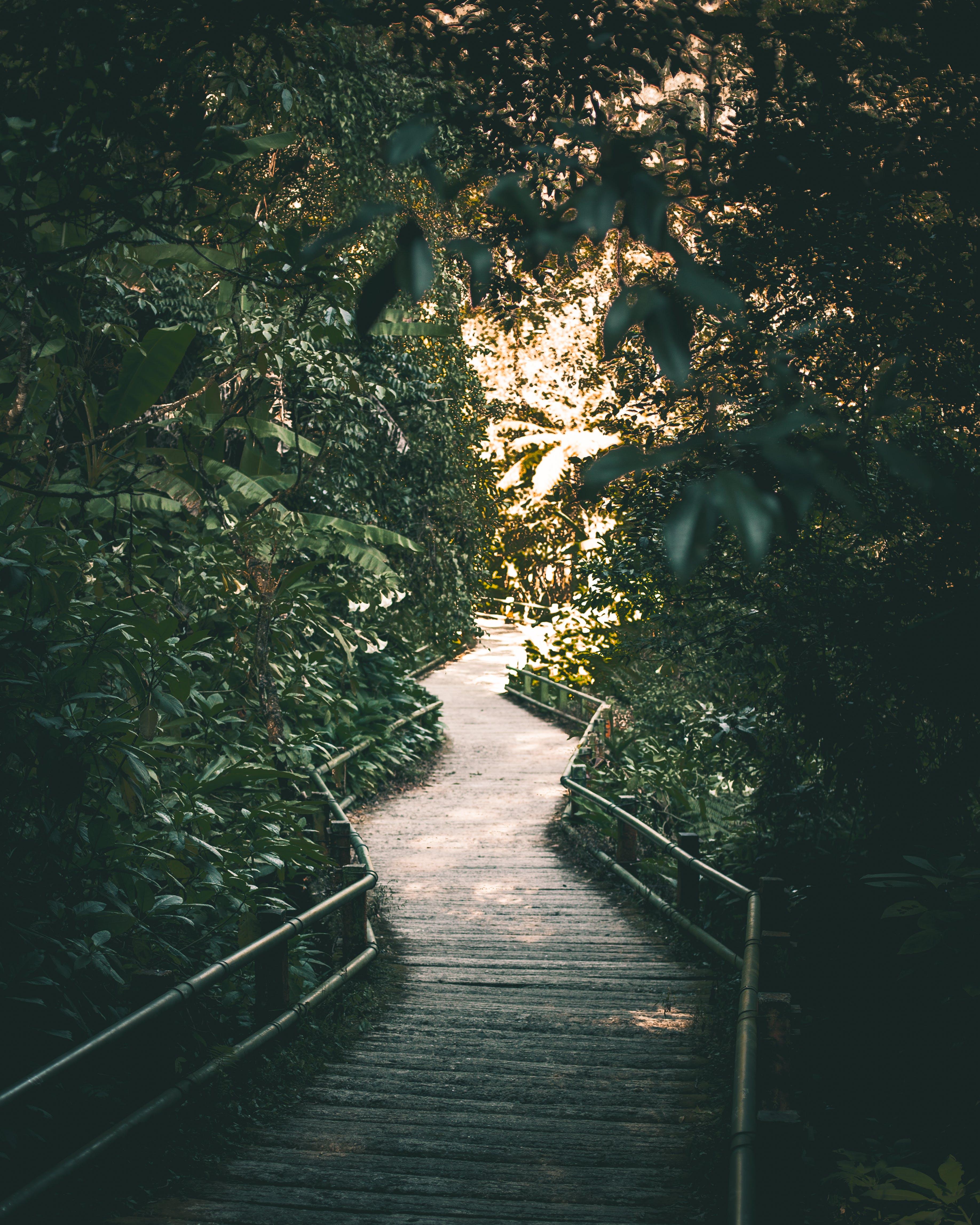 Základová fotografie zdarma na téma chodník, denní světlo, dřevěný most, krajina