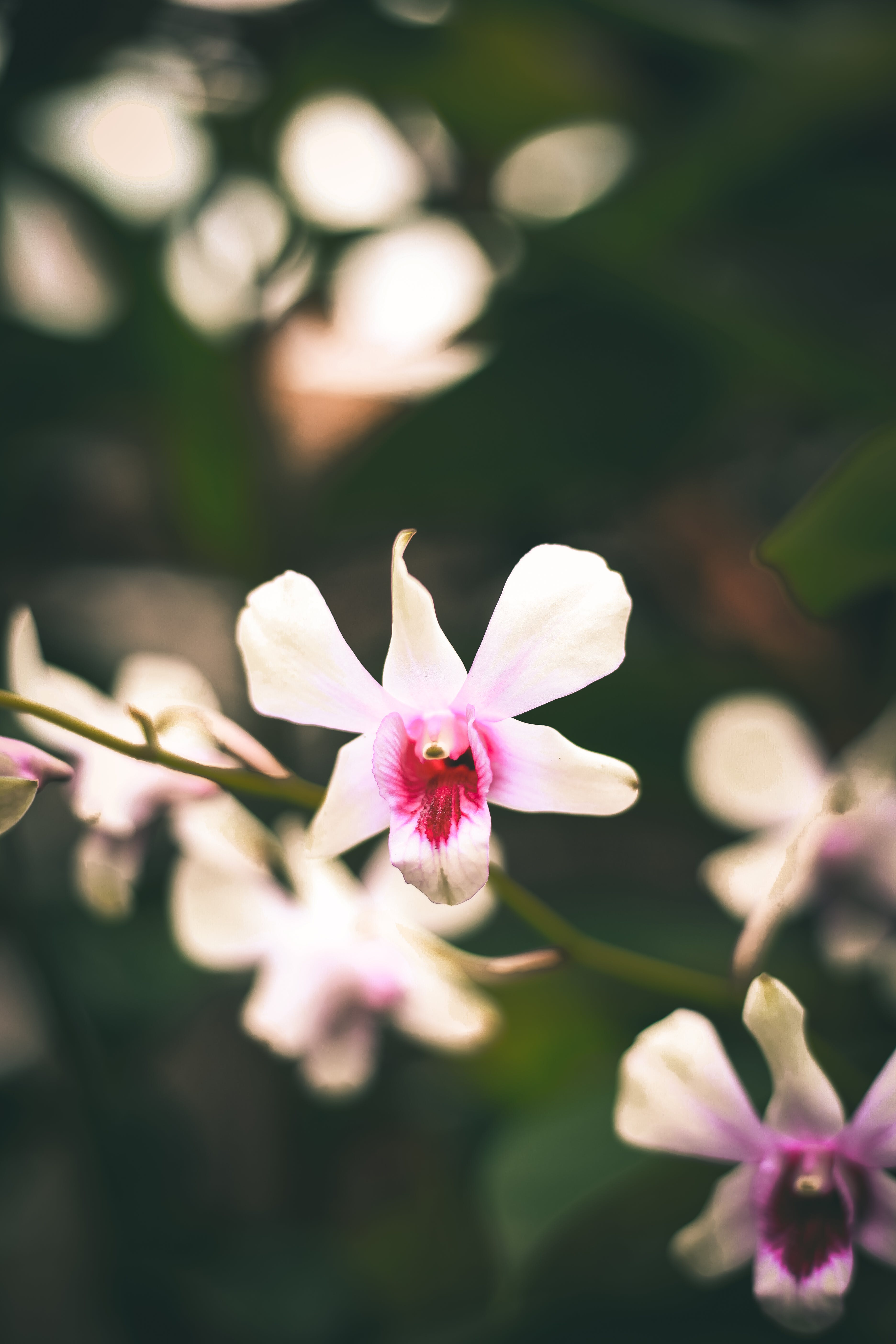 Selective Focus Photography of White-and-pink Petaled Flowers