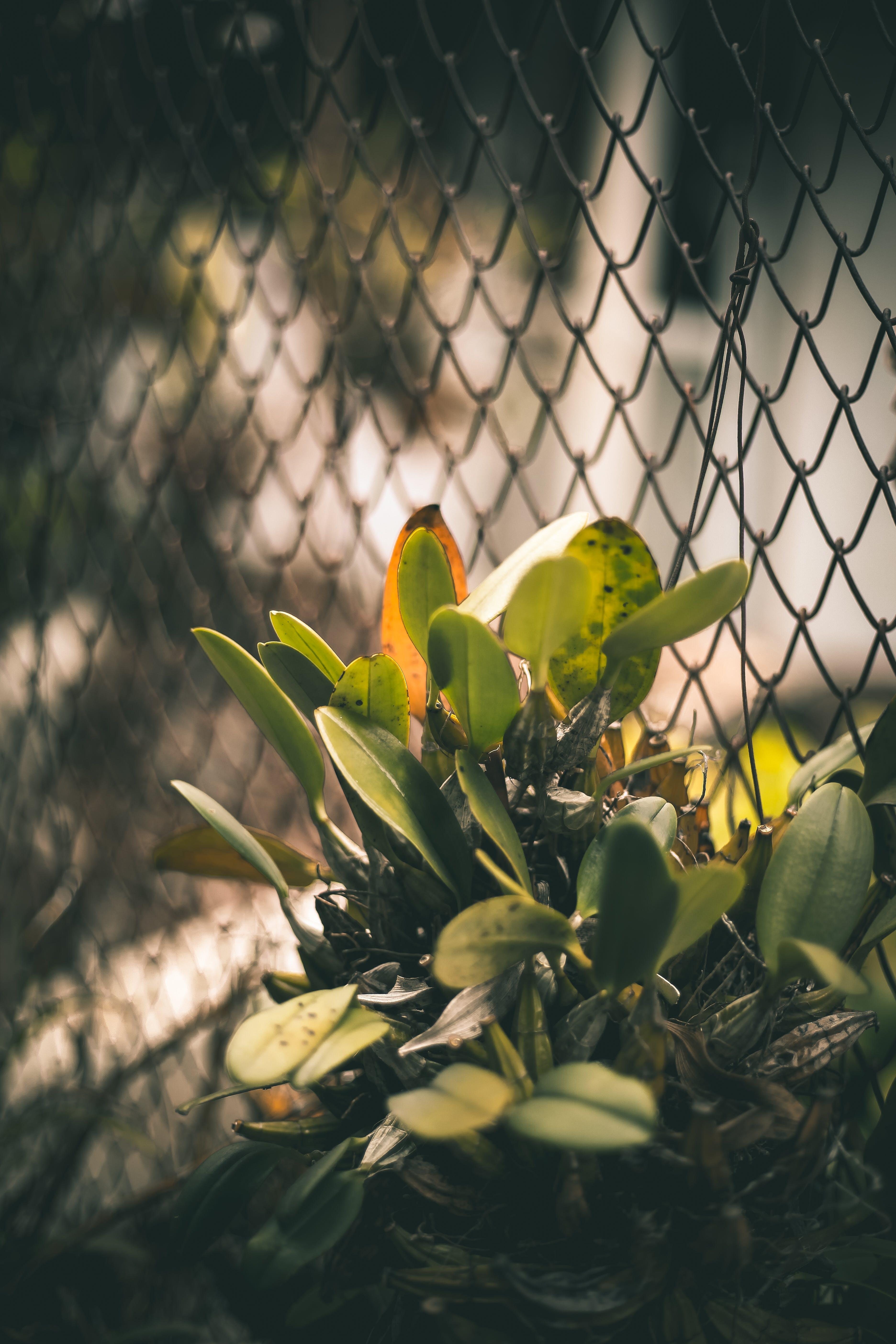 Gratis stockfoto met blurry achtergrond, close-up, daglicht, donkergroene planten
