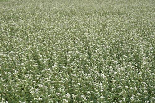 Ingyenes stockfotó mező, soba, virágmező, virágokkal teli mező témában
