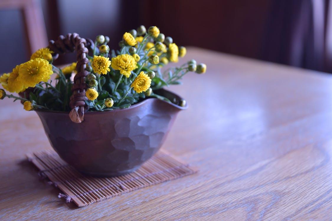 blommor, färg, flora