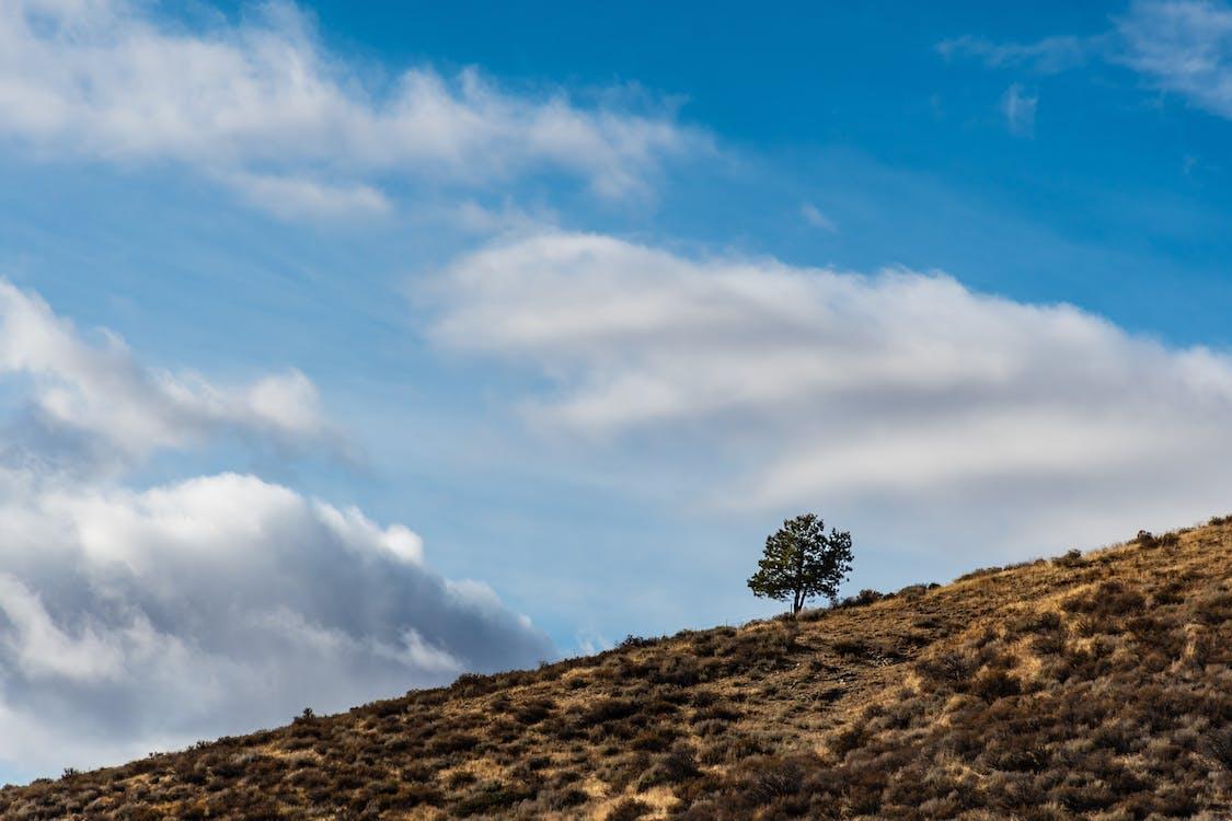 al aire libre, árbol, arbustos