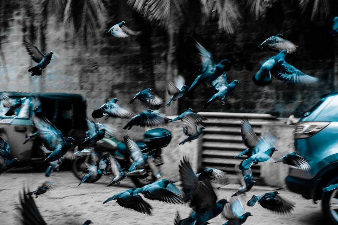 birdsphotography, Canon, ľahký