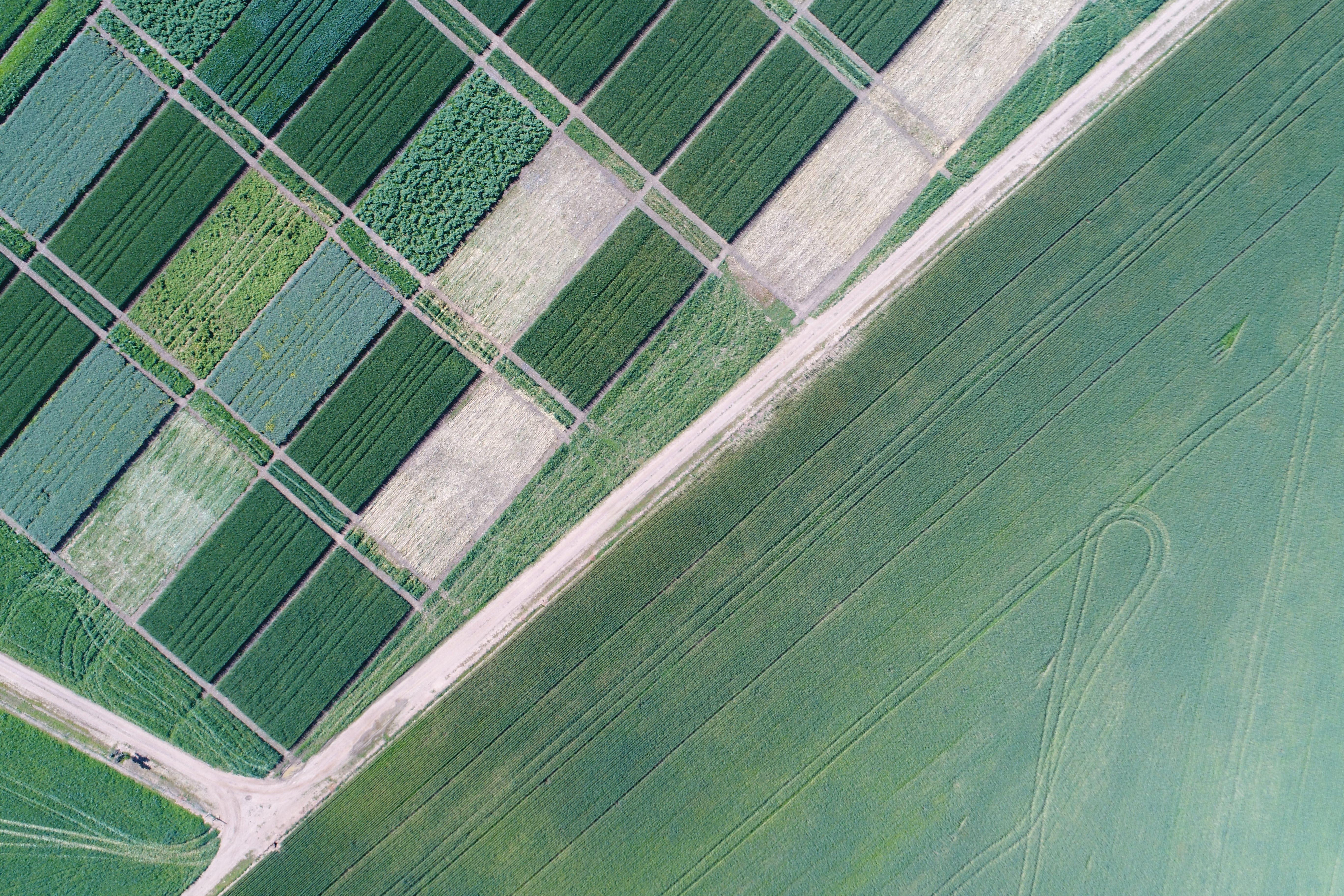 Free stock photo of aerial, agricultural, agriculture, canola