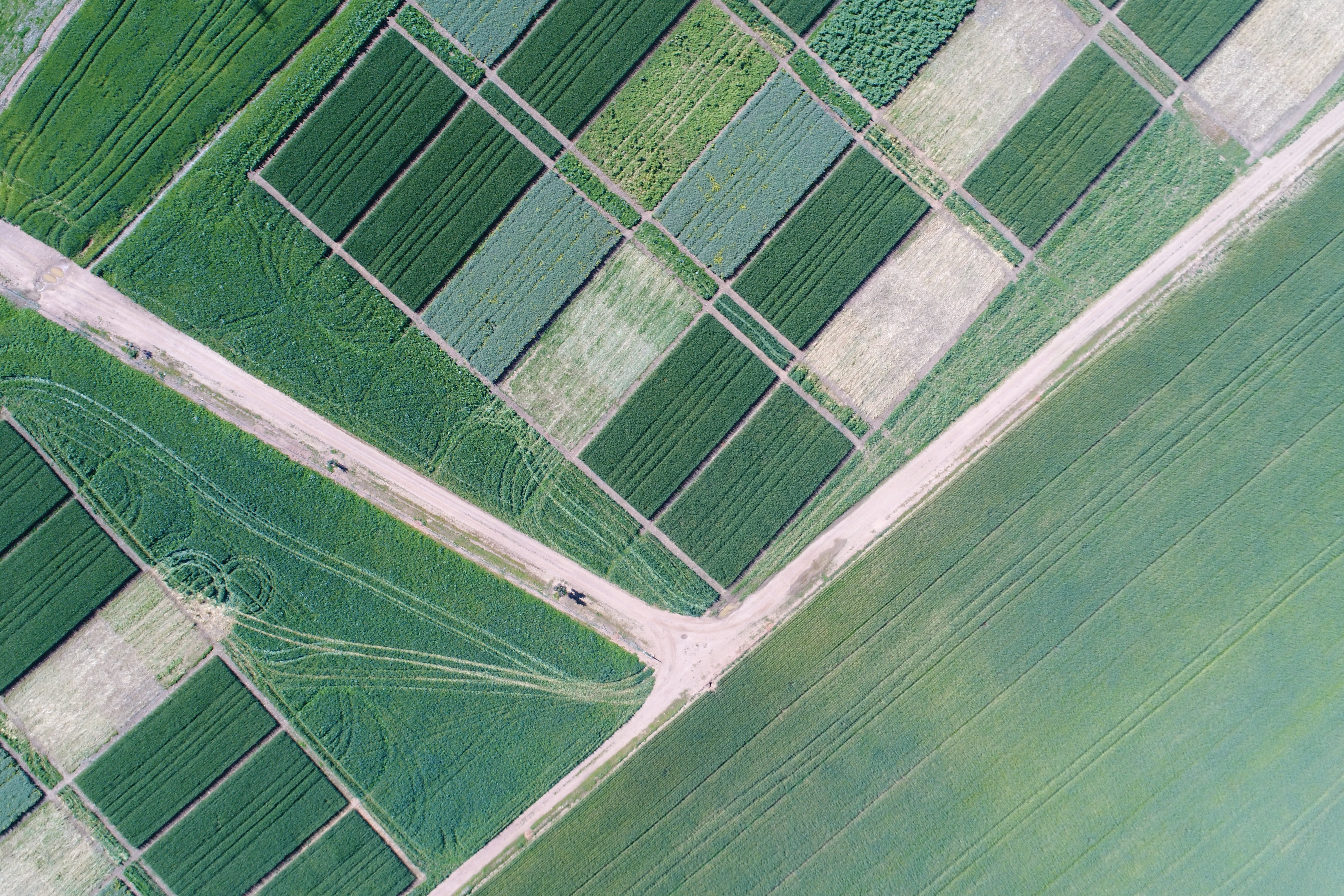 Free stock photo of aerial, agriculture, canola, drone