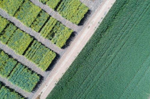 Gratis stockfoto met aarde, achtergrond, antenne, boerderij