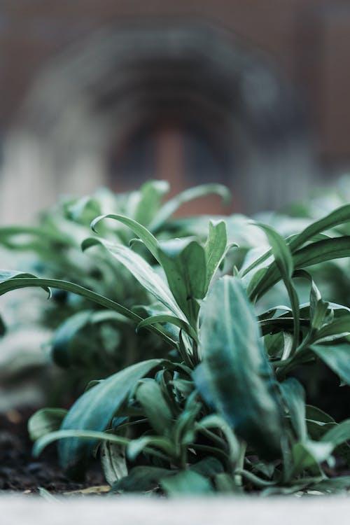 คลังภาพถ่ายฟรี ของ ความชัดลึก, สด, สวน, สีเขียว