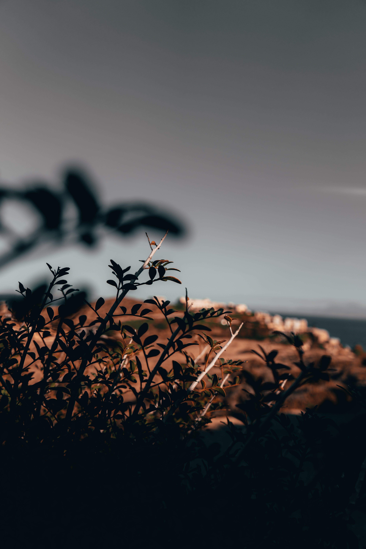 希臘, 景深, 景觀, 淺景深 的 免費圖庫相片